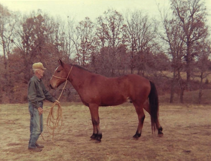 Dixie Horse picture